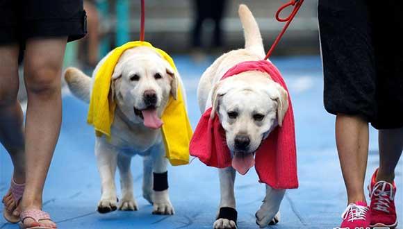 曼谷寵物狗馬拉松