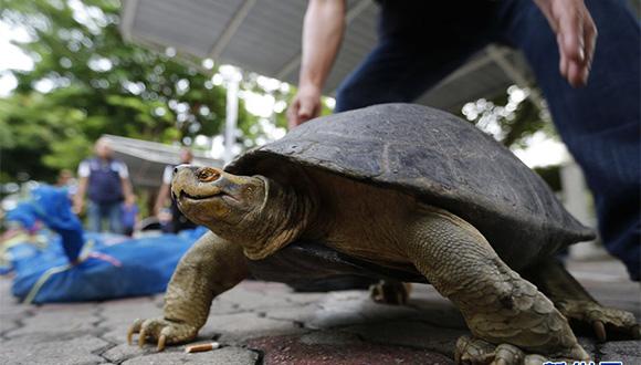 泰國當局查獲一批瀕危烏龜和蜥蜴 逮捕一名男子