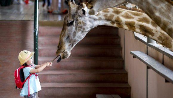 曼谷長頸鹿