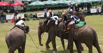 泰國舉辦年度國王杯象球錦標賽